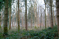 Woodland in Winter